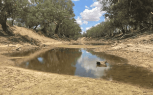 Australia's deadly man-made water crisis.